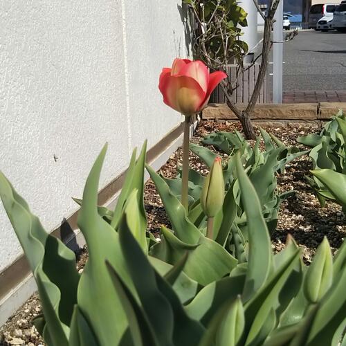 会社に春!