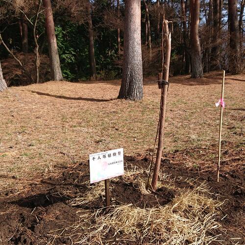 飯島町千人塚植樹祭に参加いたしました。